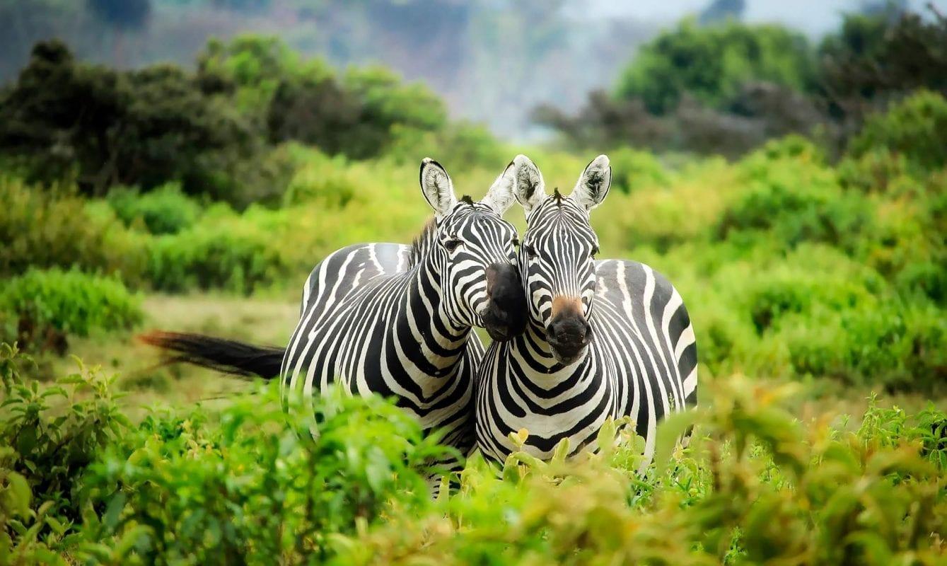 rolety dzień noc jak zebra