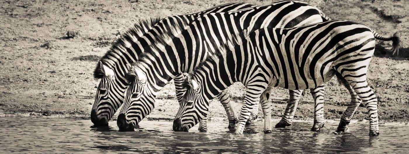 rolety dzień noc - zebra